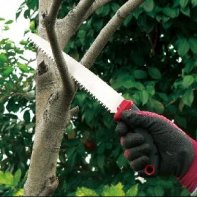 プロ向け果樹剪定のこぎり 魁21_アイコン